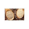 LOGO_Seeds