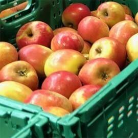 LOGO_Organic Apples – Loose in boxes