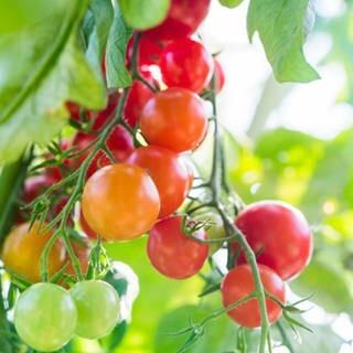 LOGO_Organic greenhouse production