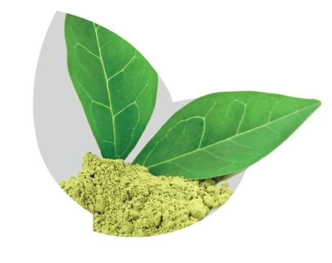 LOGO_Pflanzliche Pulver und Extrakte