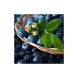 LOGO_IQF Berries and puree