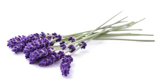 LOGO_Organic Lavender