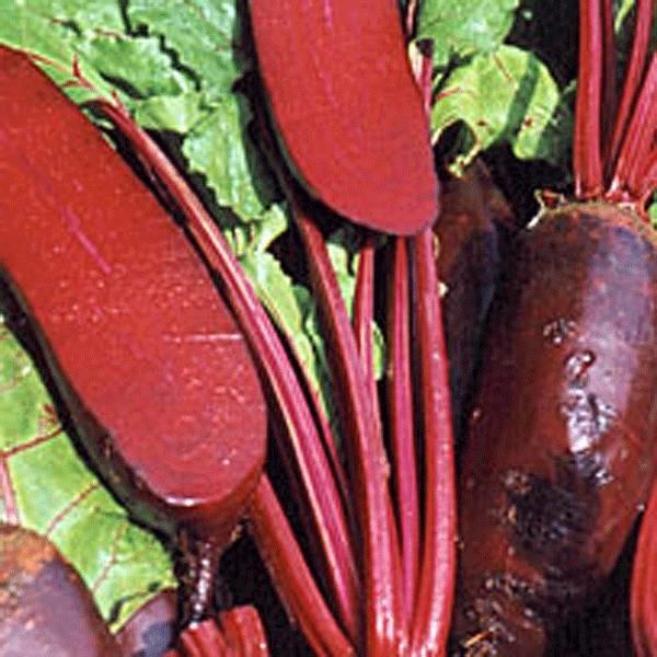 LOGO_Tiefgefrorenes Bio Gemüse