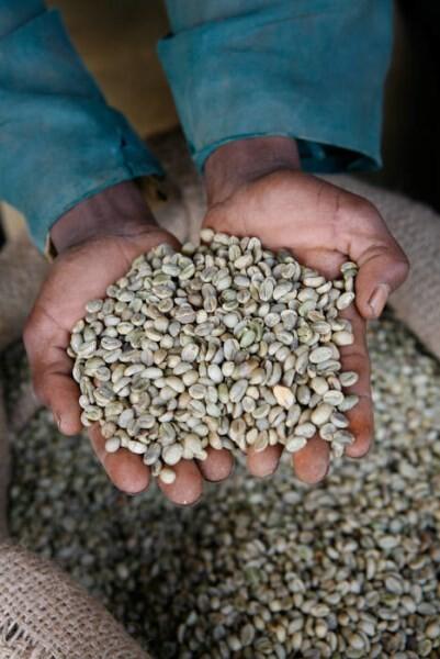 LOGO_Rohkaffee aus zertifizierter Wildsammlung