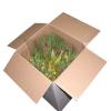 LOGO_Flowers