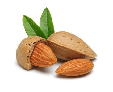 LOGO_Organic Almond Oil & Organic Almond Protein