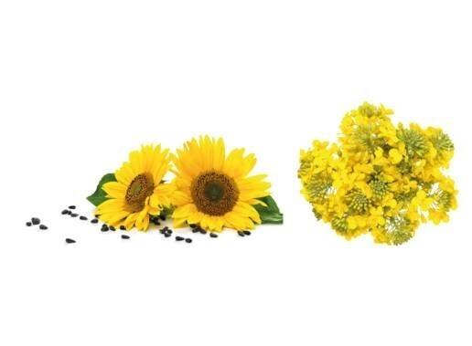 LOGO_Bio Sonnenblumenöl & Bio Rapsöl
