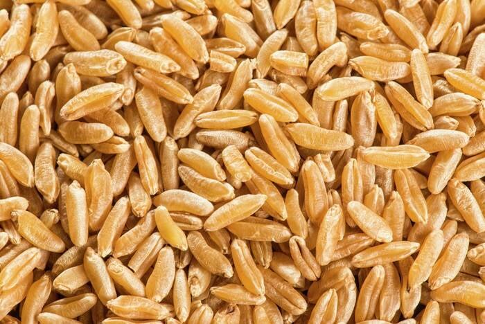 LOGO_KAMUT® brand khorasan wheat