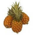 LOGO_Sonnengereifte Ananas