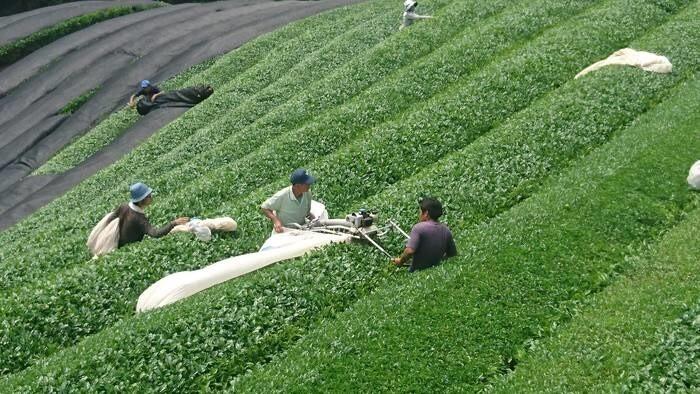 LOGO_Organic Japanese Green Tea