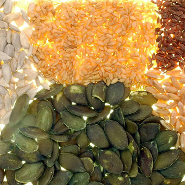 LOGO_Seeds and grains from organic cultivation