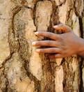 LOGO_Zertifizierung von Wald, Holz & Papier