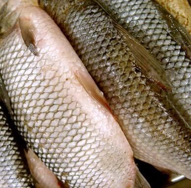 LOGO_Zertifizierung von Aquakultur & Fischerei