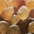LOGO_Organic Gum Acacia & Agar Agar