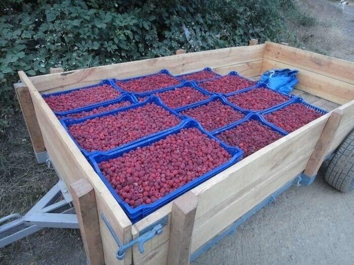 LOGO_Frozen Fruits, Frozen Berries, Purees & Concentrates