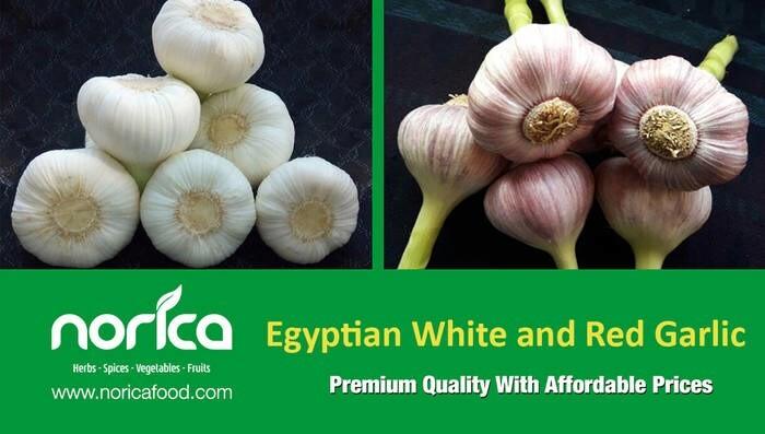 LOGO_Ägyptisches Gemüse und Früchte (getrocknet, gefroren und frisch)