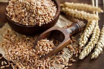 LOGO_Organic grains