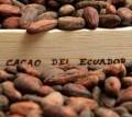 LOGO_cocoa beans - natural - fine premium Arriba, raw