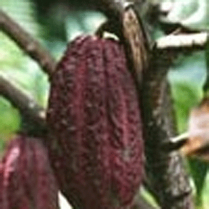 LOGO_Cocoa products