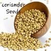 LOGO_Coriander Seed