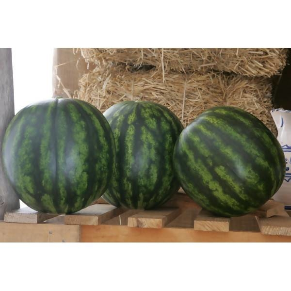 LOGO_Wassermelone