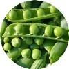 LOGO_Verarbeitungs-Gemüse