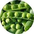 LOGO_Vegetables for processing
