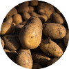LOGO_Potatoe