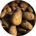LOGO_Potatoe