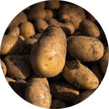 LOGO_Kartoffeln