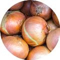 LOGO_Onions