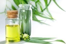 LOGO_Eucalyptus Oil