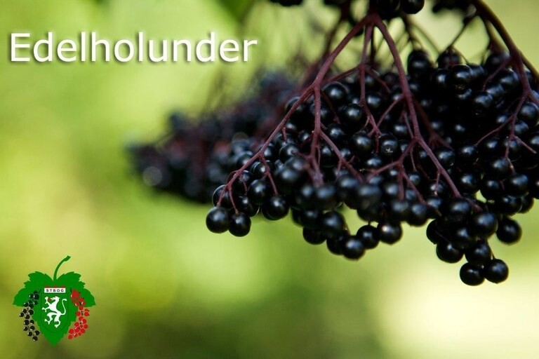 LOGO_Edelholunder