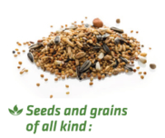 LOGO_Pasteurization of Seeds and grains of all kind