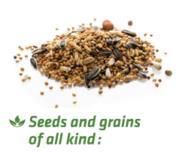 LOGO_Pasteurisierung von Samen und Saaten aller Art