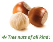 LOGO_Sterilization of all kinds of tree nuts