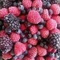 LOGO_Organic berry fruits