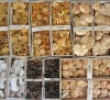 LOGO_Wild mushrooms