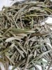 LOGO_Organic Olive Leaf