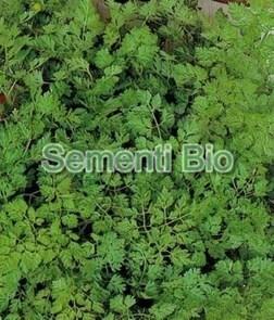 LOGO_Organic seeds