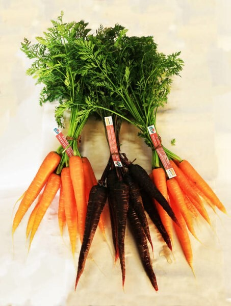 LOGO_CARROTS IN BUNCHES ORANGE AND PURPLE BIODYNAMIC ITALIAN- BIOLATINA
