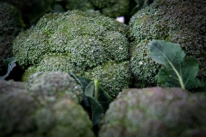 LOGO_Broccoli