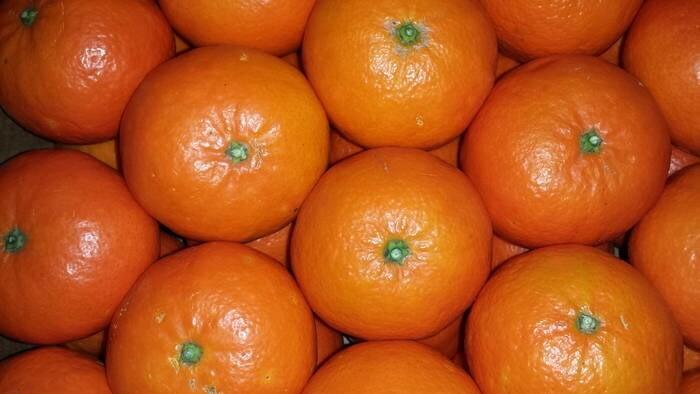 LOGO_Tangerine