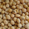 LOGO_Organic Soybean For Feed Grade
