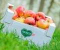 LOGO_Organic Apples