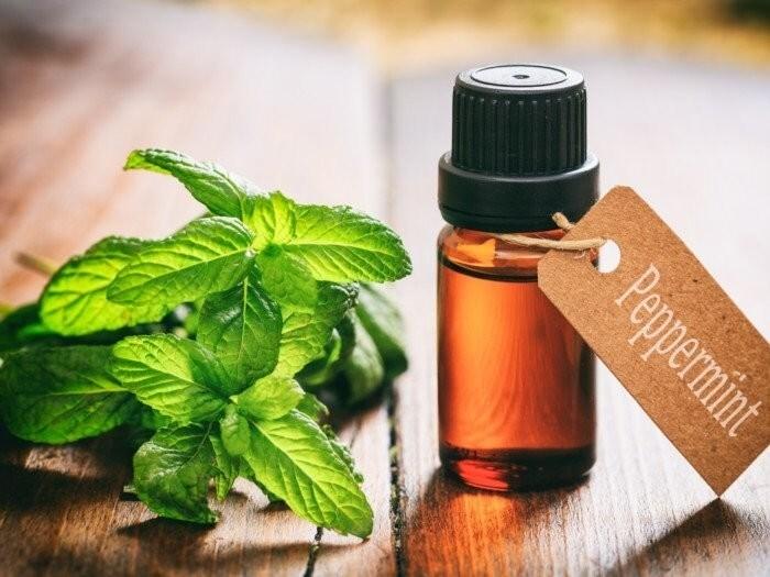 LOGO_Organic Essential Oils