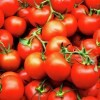 LOGO_Bio Tomatenpulver