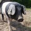 LOGO_Tierzuchtfonds