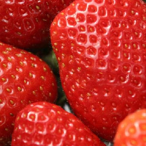 LOGO_Strawberry