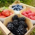 LOGO_Blackberries